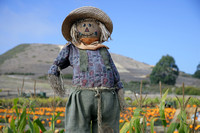 Pumpkin Patch Scarecrow, Half Moon Bay, California