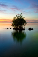 Mangrove at Dusk, Florida Keys
