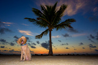 Islamorada at Sunrise with ZuZu