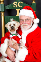 Williamson County Animal Shelter December 2014